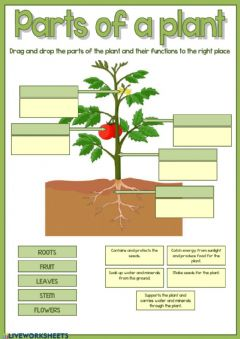 Interactive worksheet Parts of the plant