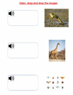 Interactive worksheet ANIMALS REVIEW 1