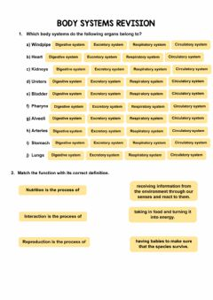 Interactive worksheet The body systems