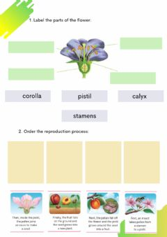 Interactive worksheet Plant nutrition and reproduction