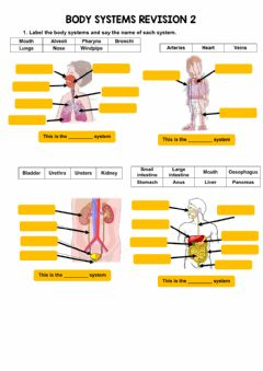 Interactive worksheet Parts of the body systems