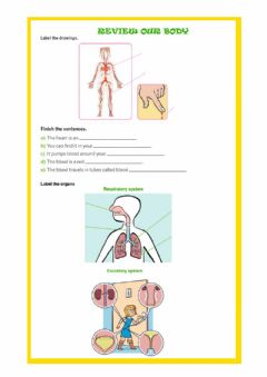 Interactive worksheet Our body