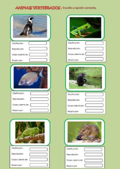 Interactive worksheet Os animais vertebrados