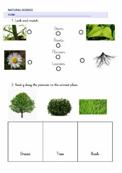 Interactive worksheet Natural Science 1º living things, non living things