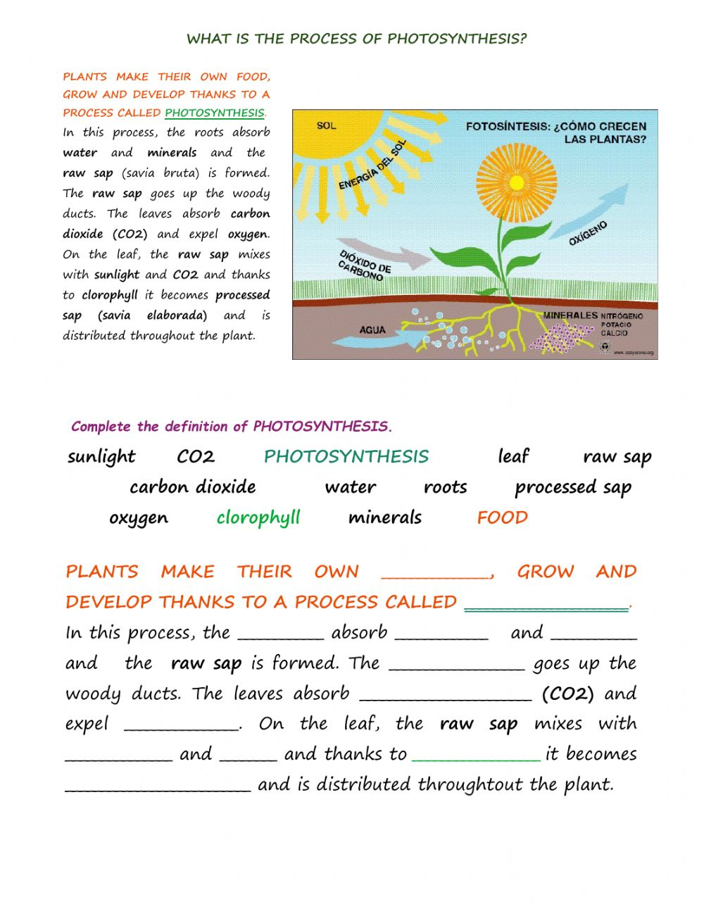 Photosynthesis interactive exercise for 6th level