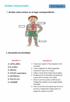 Interactive worksheet Sistema Circulatorio 4°