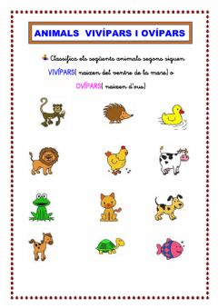 Interactive worksheet Animals VIVÍPARS i OVÍPARS