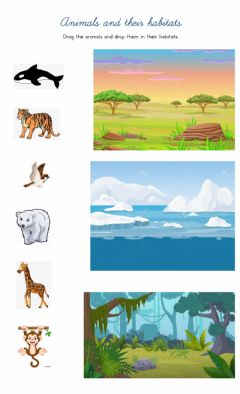 Ficha interactiva Animals and their habitats - drag and drop