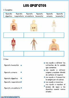 Interactive worksheet Los aparatos