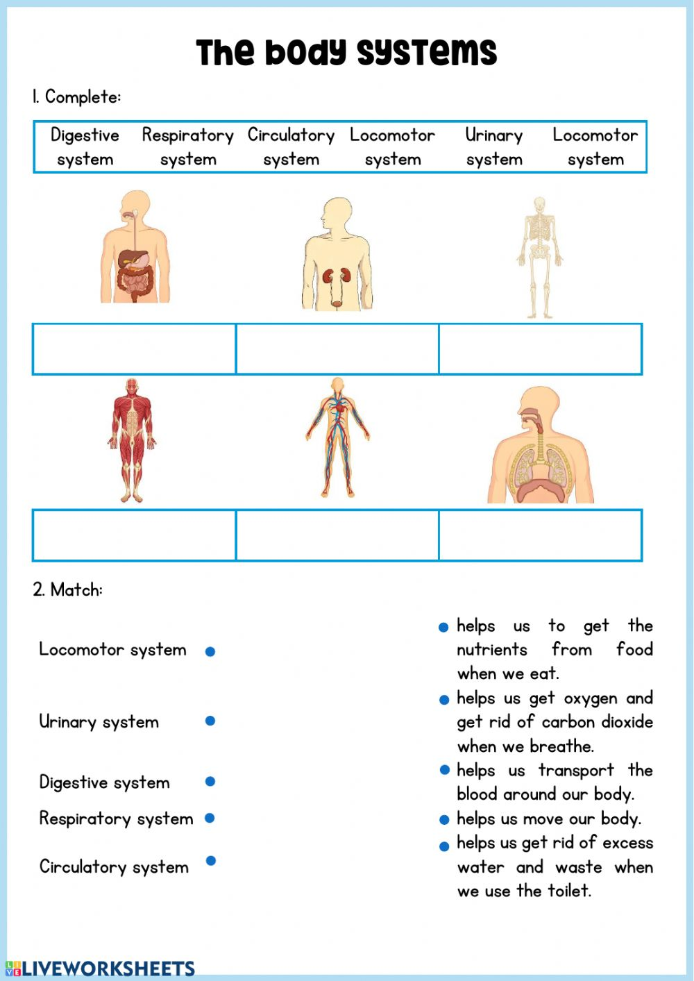 Body Systems Matching Worksheet : Organ Systems Of The ...