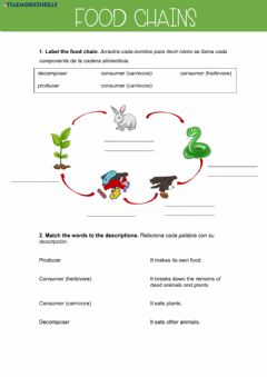 Interactive worksheet Food chains
