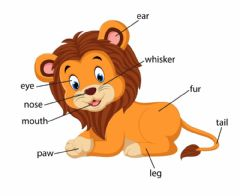 Ficha interactiva lion body parts