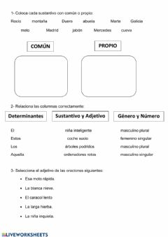 Interactive worksheet Determinantes, sustantivo y adjetivo