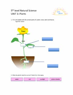 Interactive worksheet 5th Level Natural Science Unit 3
