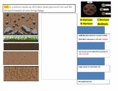 Interactive worksheet Soil Horizon