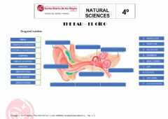 Interactive worksheet The ear