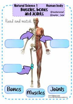 Ficha interactiva Human body:bones, muscles and joints