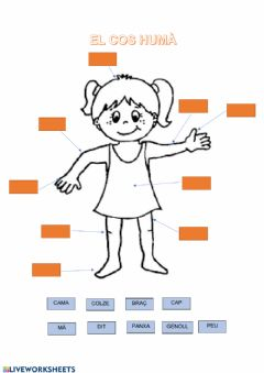 Interactive worksheet El cos humà