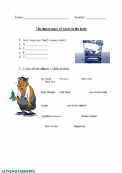 Interactive worksheet The importance of water on the body