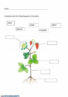 Interactive worksheet Parts of the plant 1 grade