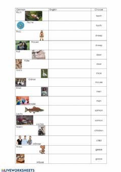 Interactive worksheet E1 Picture dictionary- Irregular plurals