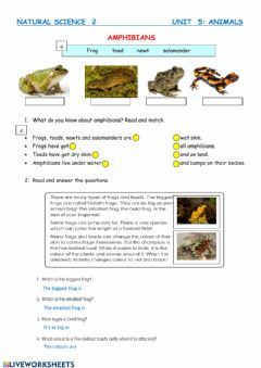 Interactive worksheet Amphibians