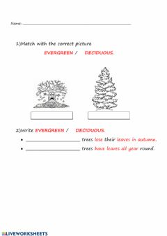 Interactive worksheet Deciduos and evergreen trees