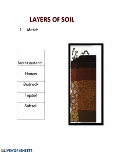 Interactive worksheet Layers of soil