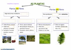 Interactive worksheet As plantas