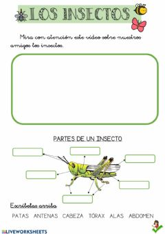 Interactive worksheet Los insectos