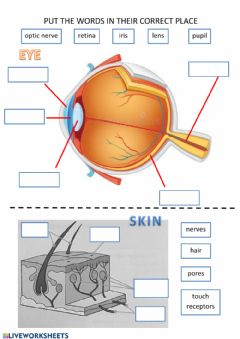 Interactive worksheet Eye and skin