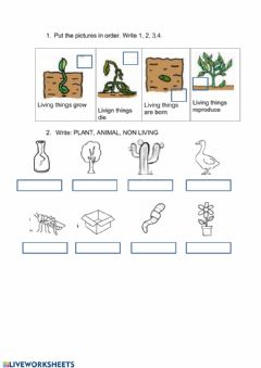 Interactive worksheet Living  things: characteristics