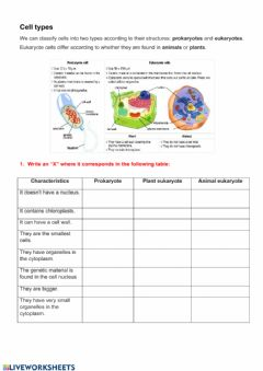 Interactive worksheet Biomolecules and cells