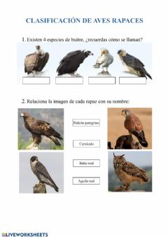 Interactive worksheet Aves rapaces