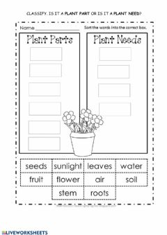 Interactive worksheet Plant parts and plant needs