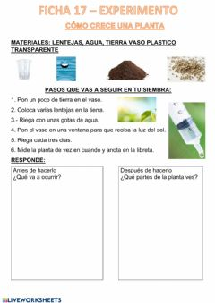 Interactive worksheet Siembra semillas
