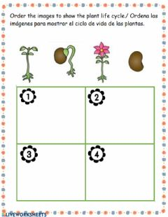 Interactive worksheet Plant cycle