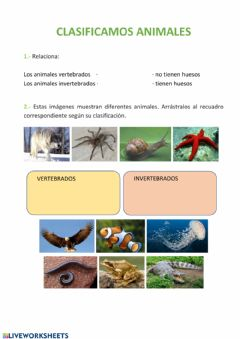 Interactive worksheet Clasificación animales