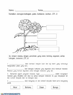 Interactive worksheet Tumbuhan