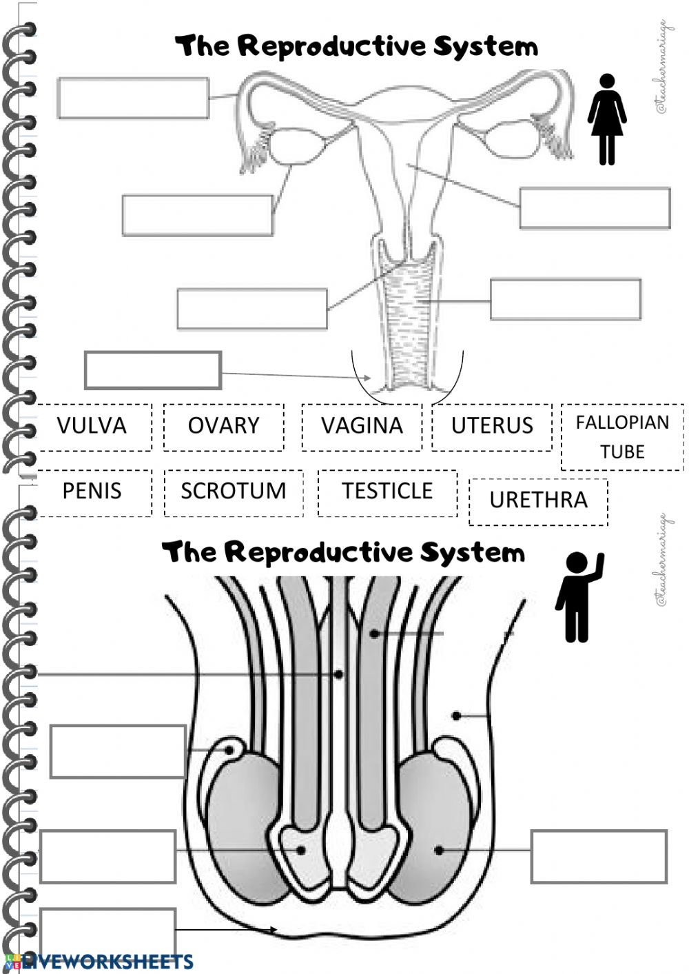 Body system   Interactive worksheet