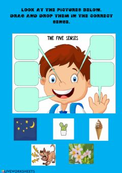 Interactive worksheet THE FIVE SENSES