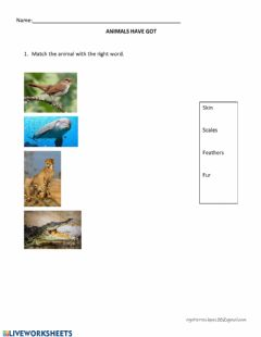 Interactive worksheet Animals covering2