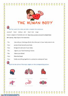 Interactive worksheet My body