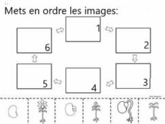 Interactive worksheet Cycle de vie d-une plante