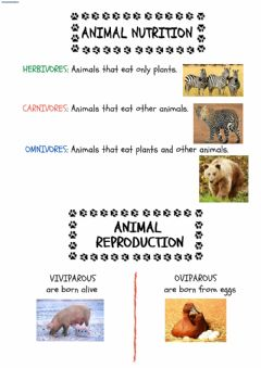 Interactive worksheet Animals: Nutritiona and reproduction