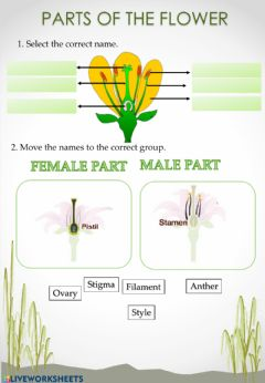 Interactive worksheet Parts of the flower.