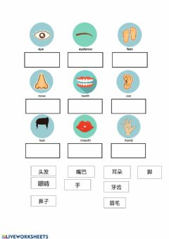 Interactive worksheet Body parts in Mandarin