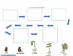 Ficha interactiva Plant life cycle flow map