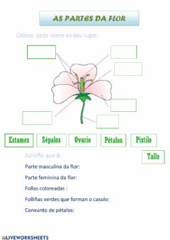Interactive worksheet As partes da flor