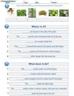 Interactive worksheet Plant Parts - Where are they and what do they do?